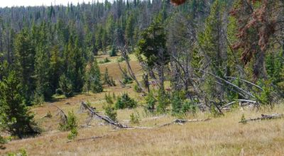 Remote Montana Mountain land Borders Forest service on 3 Sides * Gould Creek Road * Lincoln Helena