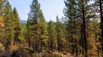 Pristine Oregon Forest Parcel * private & remote *