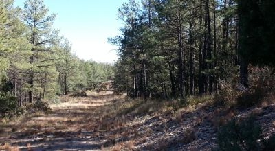 2 adjoining lots with Trees, Backing to designated park area