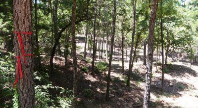 Bastrop Texas 1/4 acre lot with small Creek on cul-de-sac