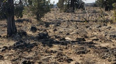 On Mesa * Remote *   2 adjoining Lots in Oregon Pines