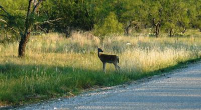 Half acre lot   Oak Trees * Deer/wildlife area   * near Lake Brownwood *