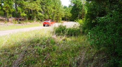 Bastrop Texas Residential Lot * Power at road * trees