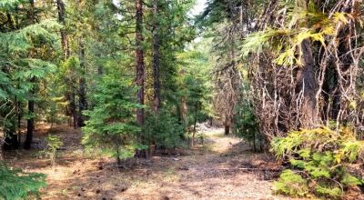 Heavily Forested property with incomplete steel pole metal roof shed/barn