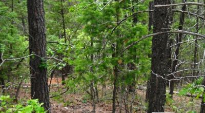 Cloudcroft New Mexico * Heavily Treed Parcel  Piney Woods