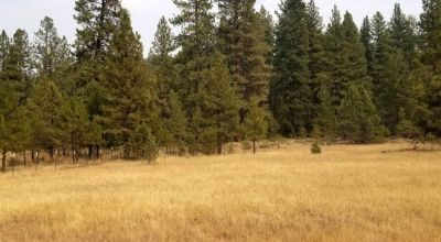 Heavily treed parcel with easy access off of hwy 140 * near Bly Mountain * Power at road