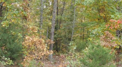 Undeveloped parcel near Ash Flat Arkansas  * Trees