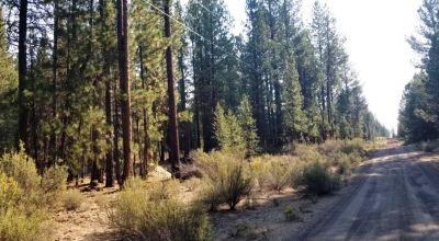 Huge Trees * Park Like settings * Power * Sprague River Pines