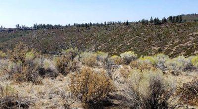 Remote Oregon wilderness. On Mesa near the Rim