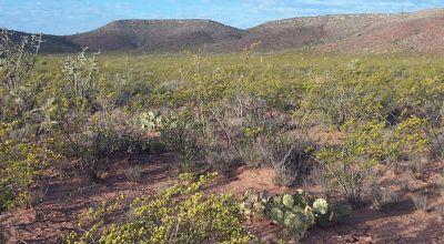 34+ Acres West Texas Desert