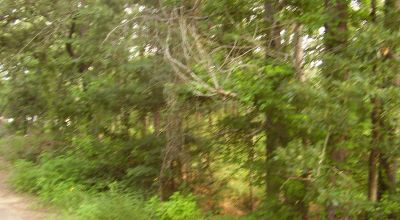 Treed residential  parcel several hundred yards from Lake Palestine