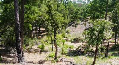 Big Trees on this 1/4 acre residential parcel near Bastrop Texas