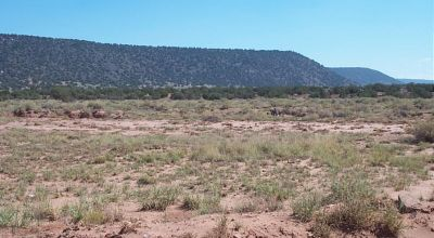 12 miles East of Snowflake Arizona * Ranch of the Golden Horse