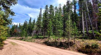 Forested land near the High part of Forbes Park *