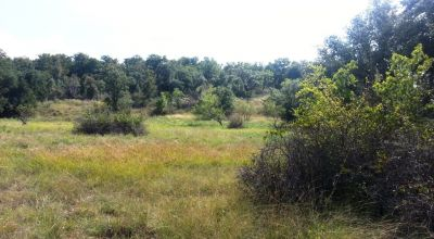 Lake Brownwood area 1/2 acre parcel. Oak Trees.  Wildlife