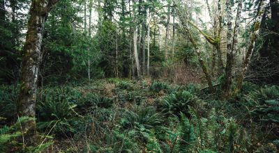 Forested Lot #25 & #26 Near North Olympia, Washington - Close to 50-acre Burfoot Park!