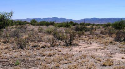 Sunny southern Arizona Desert  * Star filled night skies