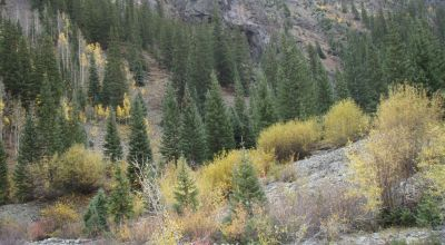 1 of a Kind * Pristine Mountain Beauty with  Animas River * Power *