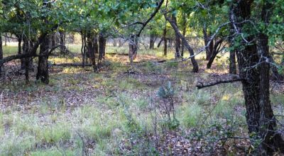 Lake Brownwood area lot * Oak Trees Texas Hill County land