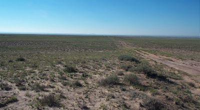 Arizona Desert * Petrified Forest & Painted Desert area