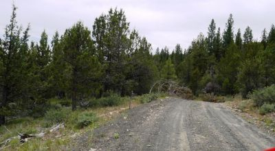 40 acre Forested parcel includes base of the hill and part of the hill * Views Trees