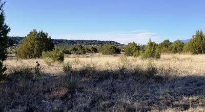 120 Acres Soda Creek area