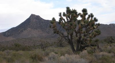 Joshua Trees * Views Views Views * Lake Mead City