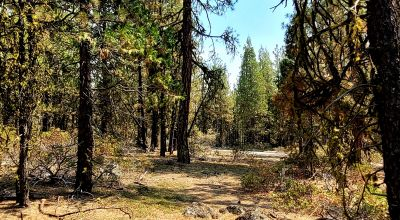 Spacious Treed Parcel * Southerly facing * 5+ acres