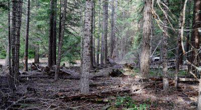 Fox Hollow just West of Upper klamath Lake * treed parcel