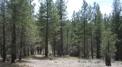 3 adjoining treed lots on cul de sac * buy all or individually ($15000ea.)