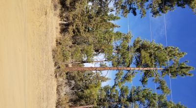 Trees on these 2 adjoining buildable Lots * Power at road * buy 1 or both