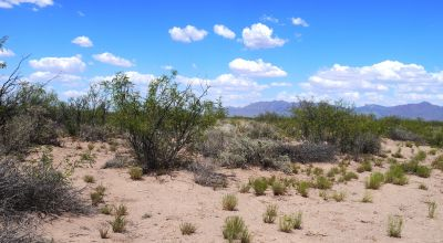 Southern New Mexico Between Columbus and Deming * 2 full acres