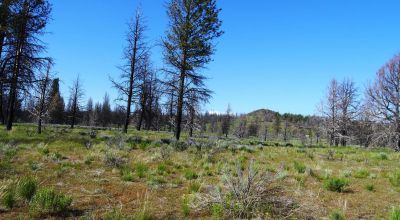 REDUCED * 2 adjoining lots Klamath County Oregon * burned in Fire several years ago.