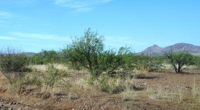 Historic Cochise County near Douglas Arizona. Mobile home lot