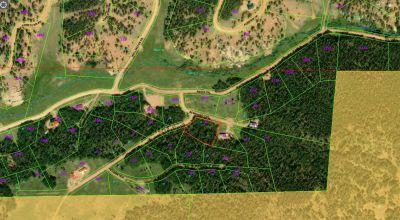 Treed Corner Lot * Cripple Creek  Colorado * Power Water Available