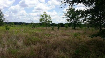 4 adjoining Lots * all buildable * borders Large ranch