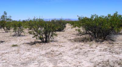 Remote Arizona Desert Land * Seclusion Mountain views
