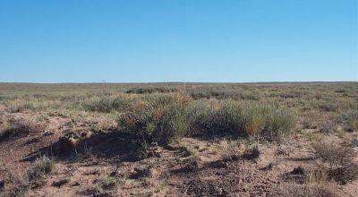 Sunny Arizona * Near Holbrook and Petrified Forest