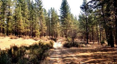 Pristine Oregon Forest Parcel * private & remote *