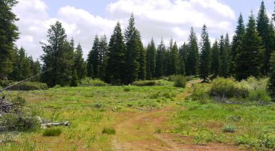 Pristine Forest Land  * Borders Government Land * Trees  Meadows  Seculsion *