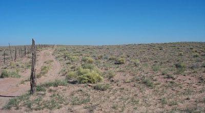 Scenic Sunny Arizona .  Near Holbrook, Petrified Forest and Painted desert