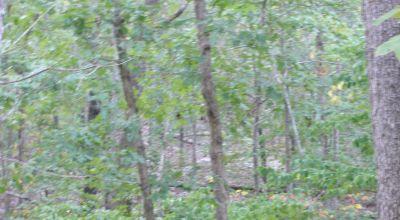 Unimproved Lot * Heavily Treed * Ash Flat Arkansas