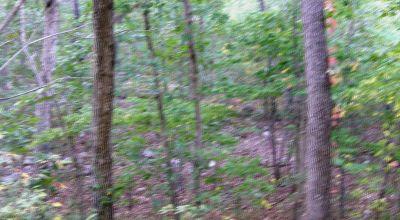 Camp * RV Wooded parcel near Ash Flat Arkansas